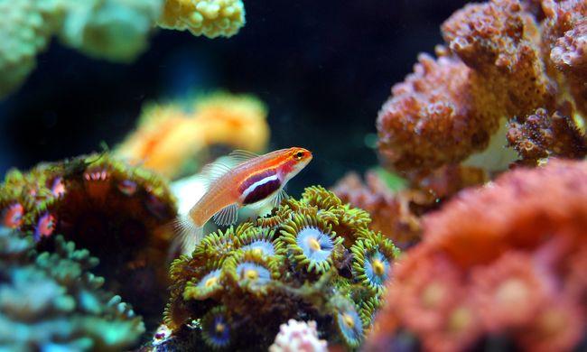 A kutatókat is meglepte az, amit a Nagy-korallzátonynál találtak