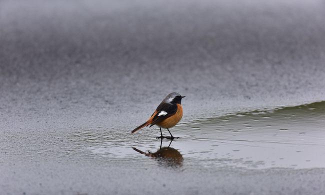 Erősebb hidegfront érkezik, esőt és szelet hoz