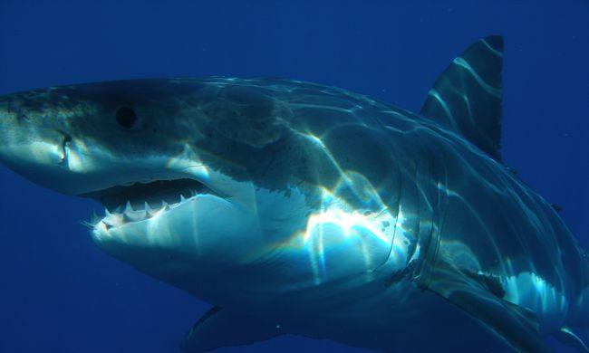 Mágnessel a cápák ellen? Ez a különleges módszer életeket menthet