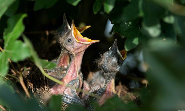 Felhívást adtak ki, nagyon fontos szabályra emlékeztetnek a hazai természetvédők
