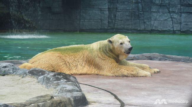 Szomorú hírt közölt az állatkert: el kellett altatni a 27 éves Inukát