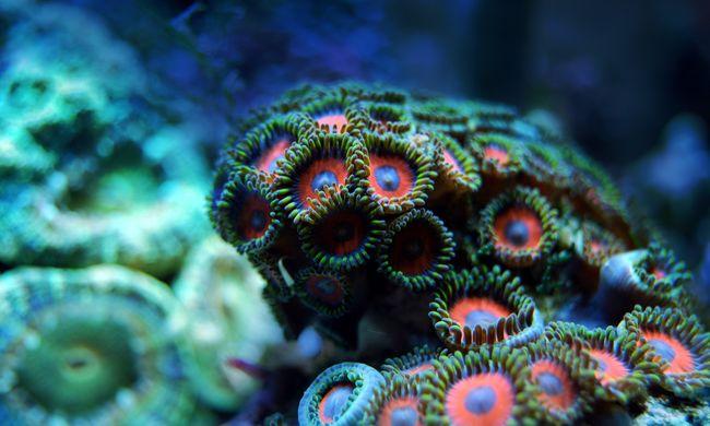 A tudósok is meglepődtek azon, amit a tengerben találtak az Egyesült Államok keleti partjainál