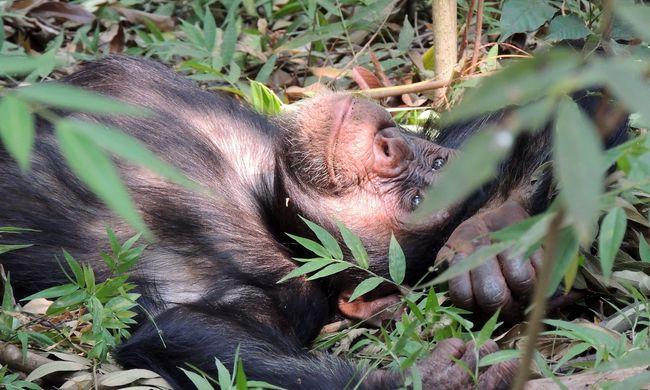 Újabb fajok kerülhetnek veszélybe - ezt teszi a mezőgazdaság miatti erdőirtás
