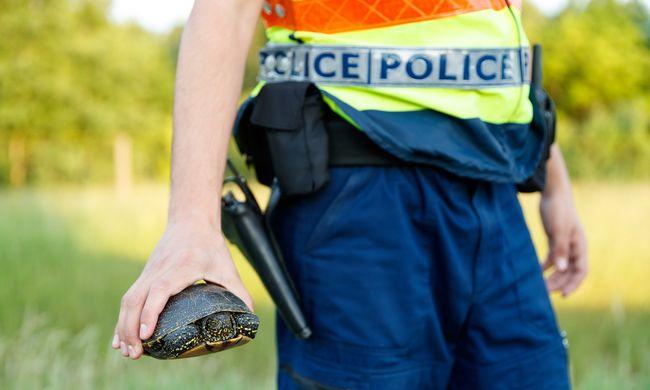 Szívmelengető, amit a magyar rendőrök tettek - így mentették meg az eltévedt kisállatot