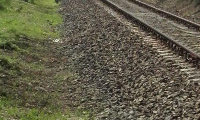 Gázolt a vonat, amputálták a sérült medvebocs lábát