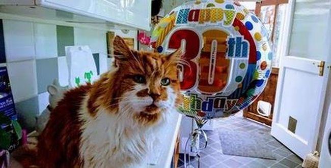 Tudja, hány éves a világ legidősebb macskája? Rubble rekordot döntött