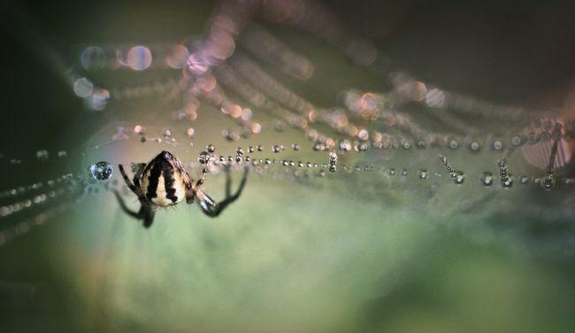Különös módját választotta a póktól való megszabadulásnak a félős fiatal