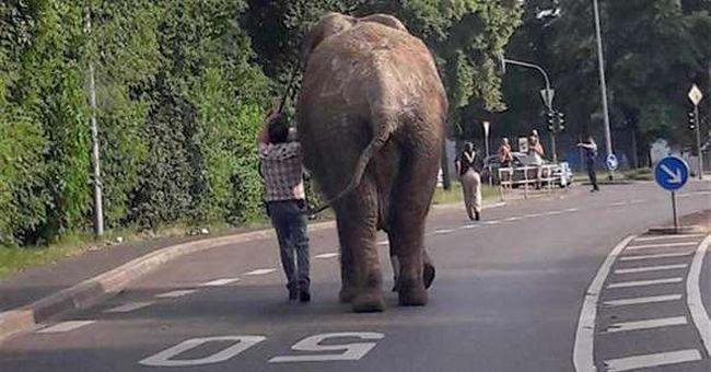 Hihetetlen látvány, szökött elefánt indult városi sétára a kocsik között