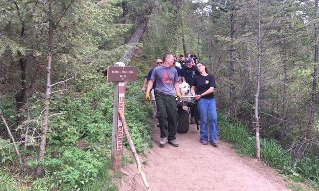 Megható kutyamentés: tűzoltók mentek a hegyen bajba jutott kedvencért
