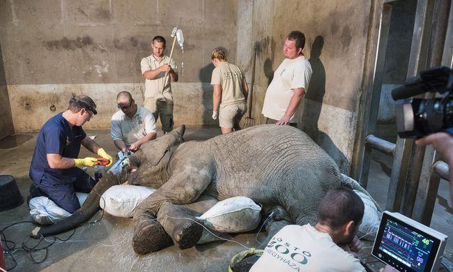 Drámai pillanatok a Nyíregyházi Állatparkban: másfél órán át küzdöttek az állatorvosok