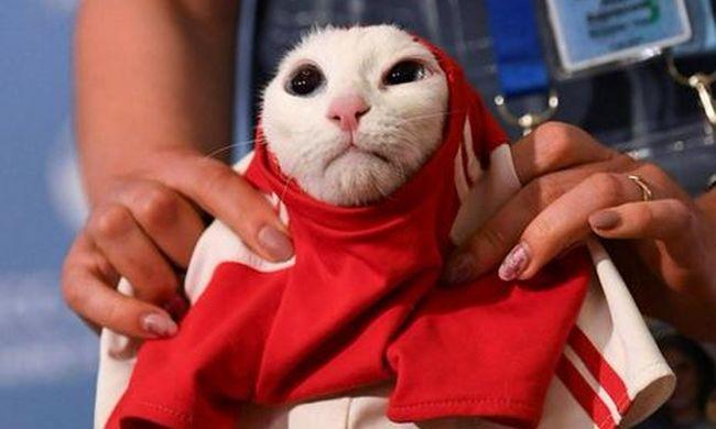 Macskatáppal jósolt a vébé kabalaállata, Achilles szerint az oroszok nyernek