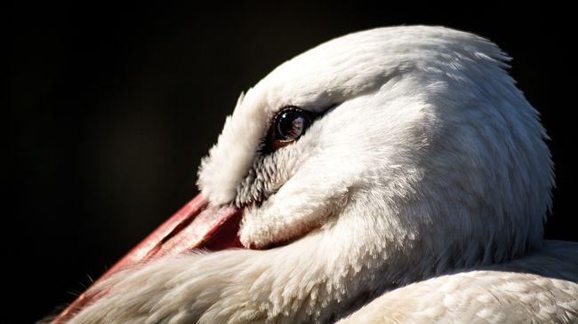 Megrázó fotókat tett közzé a madárkórház, szörnyű dolog történt a hortobágyi gólyával