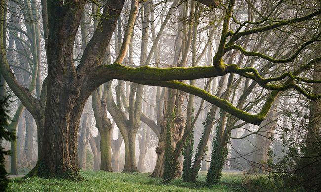 Szörnyű látvány: szétszórt emberi maradványokat talált az erdész a fák között
