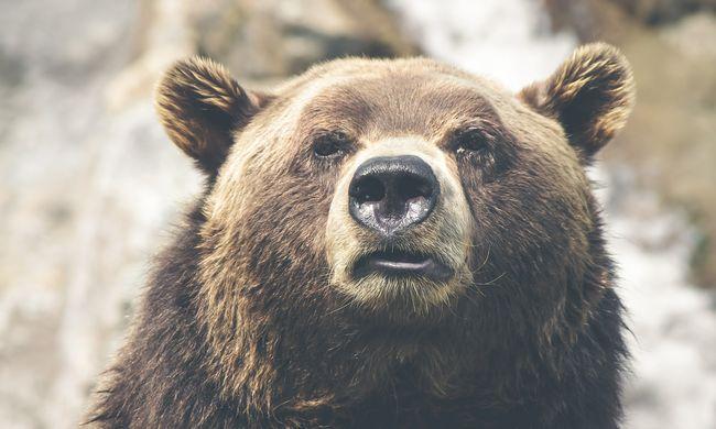 Rettenetes baleset: medvével ütközött egy autó, egy ember meghalt