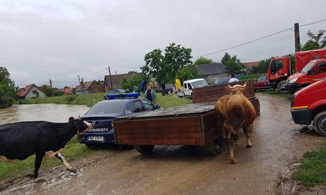 Őzgidákat is menteni kellett az árvíz miatt-Fotók