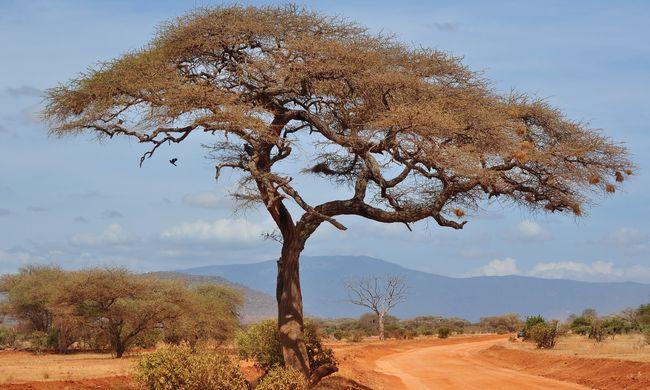 Senki sem tudott a világsikerről, ez a férfi elsőként szelte át ilyen körülmények között Afrikát