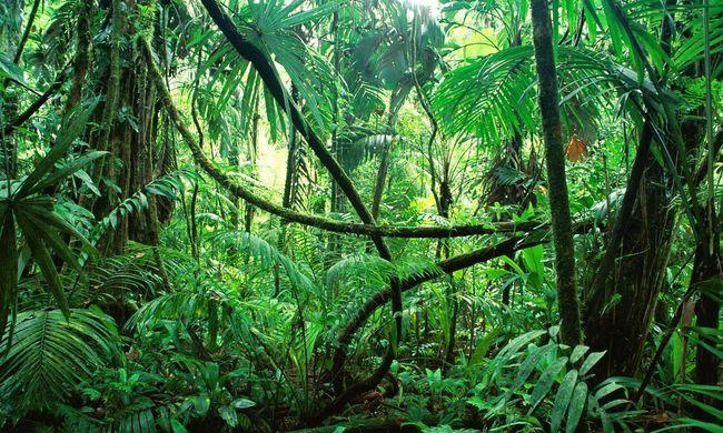 Újabb meglepő hatása derült ki a klímaváltozásnak, a fák különös módon viselkednek