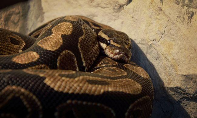 Durva rendőri túlkapás, egy kígyó is előkerült - videó