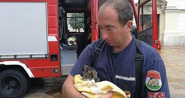 Megható igyekezet: csatornából mentettek ki egy cicát Pécsen
