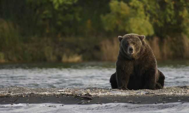 Fejszével végezte ki a medvét, a vadászegyesület helyszínel