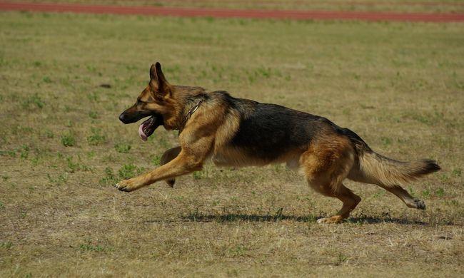Kegyetlenül végzett valaki a hős életmentő kutyával, az olaszok elégtételt követelnek