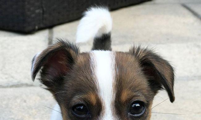 Itt a világ egyik legtündéribb kutyusa: felháborító, hogy mit csináltak gazdái vele