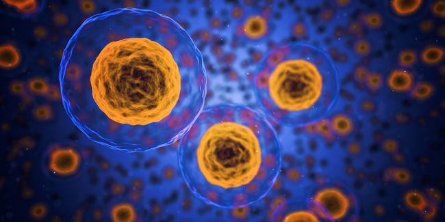 Sikerült megmérni: ilyen sebességgel pusztulnak a sejtek a testünkben