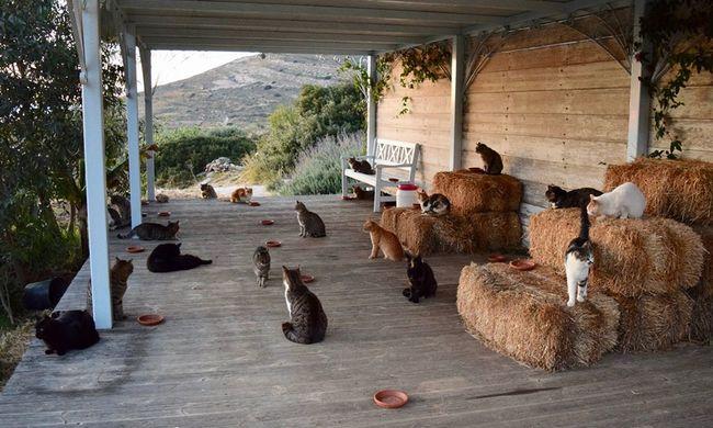 Igazi álommunka: egy szigetre költözhet fél évre, ha szereti a macskákat