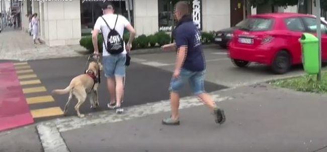 Szerinte a kutya hibázott: megszólalt a sofőr, aki kis híján elütött egy látássérültet