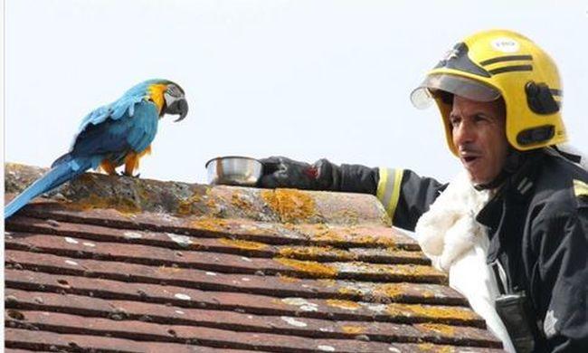Hihetetlen ez a papagáj, káromkodva küldte el megmentőit
