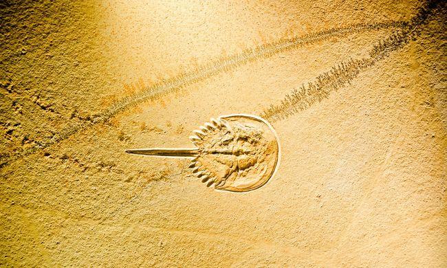 Gigantikus állat maradványaira bukkantak, ez a lelet átírja a történelmet