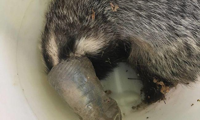 Újabb riasztó fotó: ismét bajba került a műanyag hulladék miatt egy hazánkban élő állat