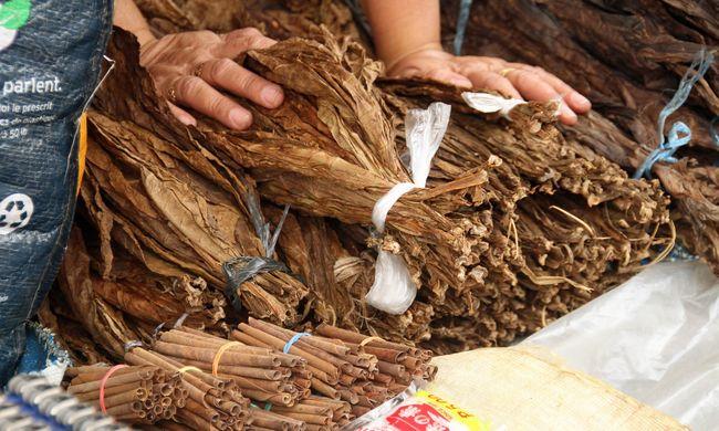 Nagyon rossz helyzetben a hazai dohánytermelők: ez történt a dohányültetvényeken