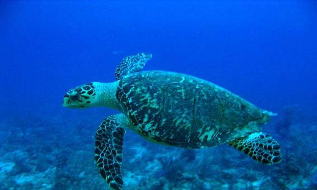 Megóvják az állatokat, teknősök miatt állították le az építkezést