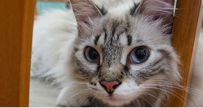 Különleges meglepetést vitt haza a cica, rendőrt kellett hívni