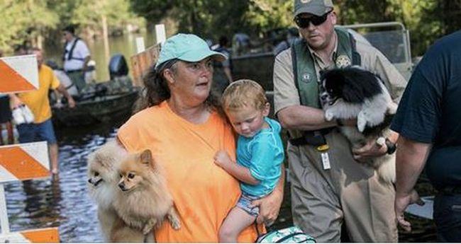 Több tucat állatot mentett meg az ítéletidőben, most letartóztatták