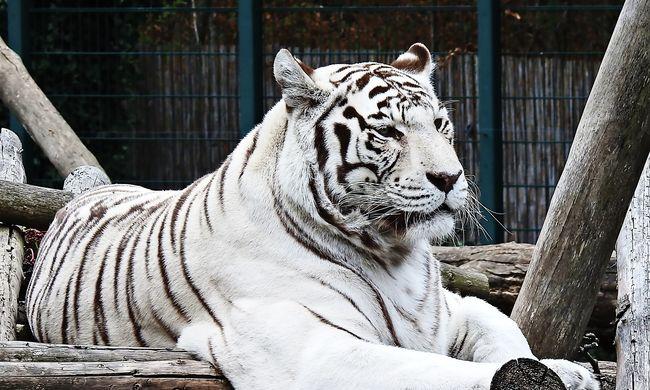 Borzalom az állatkertben: ömlött a gondozó torkából a vér, nem tudták megmenteni