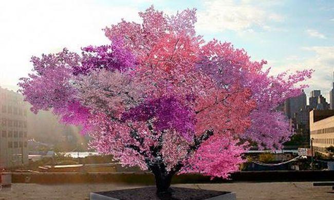 Csoda az egyetemen, ezen a fán 40 fajta gyümölcs terem