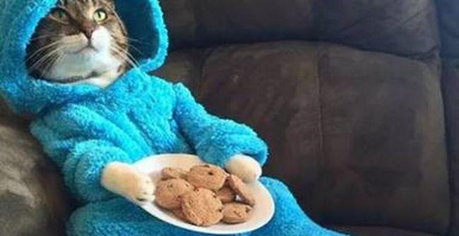 Hiba történt, meghívót kapott az amerikai külügy egy pizsamás macskás sütizéshez