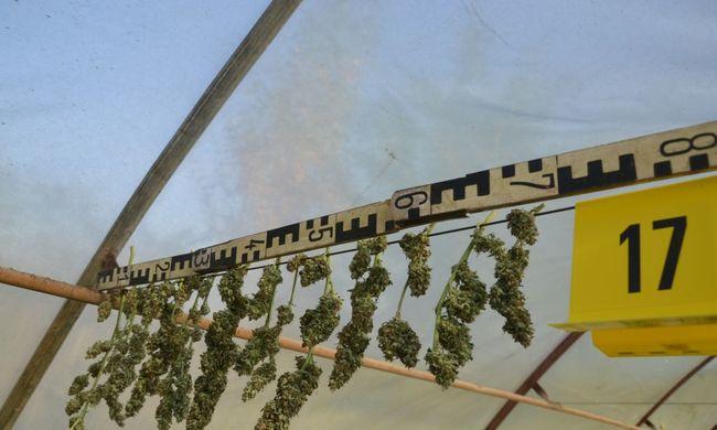Lecsapott a rendőrség, egy férfi otthonában termesztette a cannabist