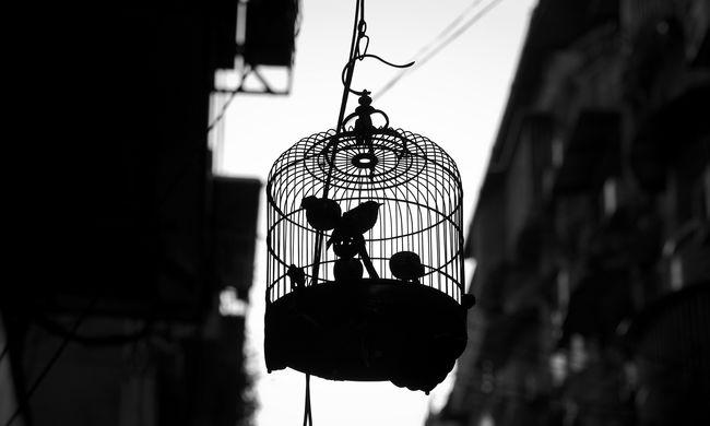 Ragasztóval fogott védett madarakat a magyar férfi, kínhalált haltak az állatok