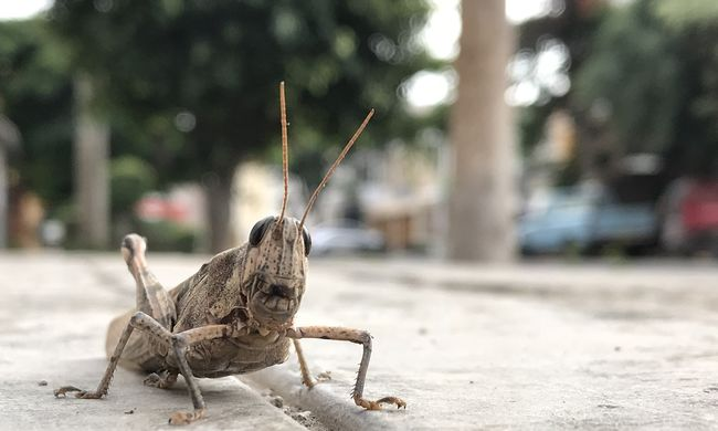 Sült rovarok kerültek a boltokba, ez lehet a megoldás az élelmiszerhiányra