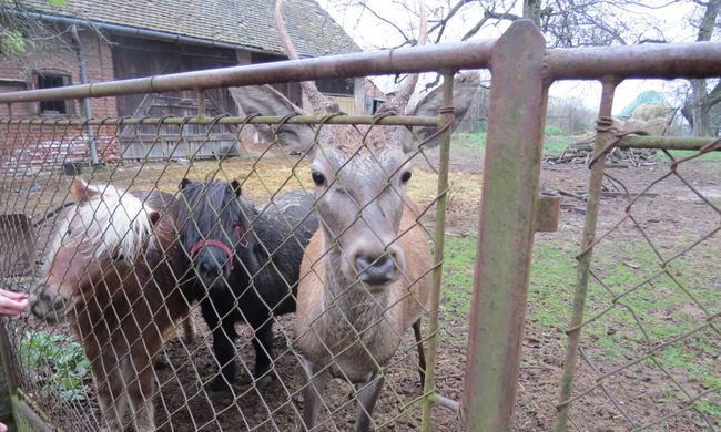 Különös bűnügy Somogy megyében: lovak között nevelte Bandit