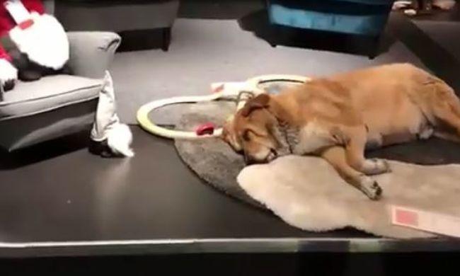 Tombolt a vihar, befogadta a kóbor kutyákat egy Ikea Szicíliában