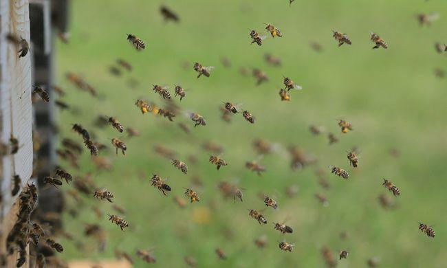 Kis érzékelőket raknak a méhekre, ezt fogják megfigyelni a szerkezettel