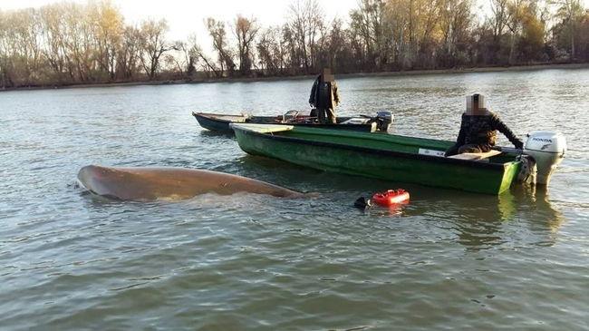 Dráma a Tiszán: hárman zuhantak a folyóba, az utolsó pillanatban érkezett a segítség