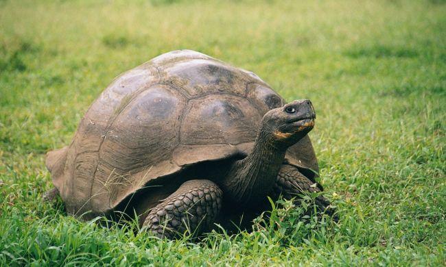 Több mint száz évig kitartottak egymás mellett, most örökre összeveszett a teknős pár