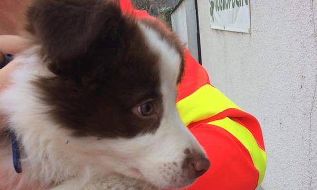 Kétségbeesett kiskutya ült a mentők autója elé Budaörsön, megmentették - fotó
