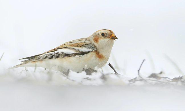 Ritka madár érkezett a magyar síkságra, nagyon barátságos is lehet