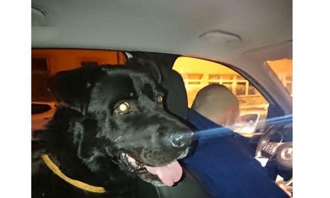 Vonattal utazott Győrbe, majd a rendőrautóban keresett menedéket egy kutya szilveszterkor